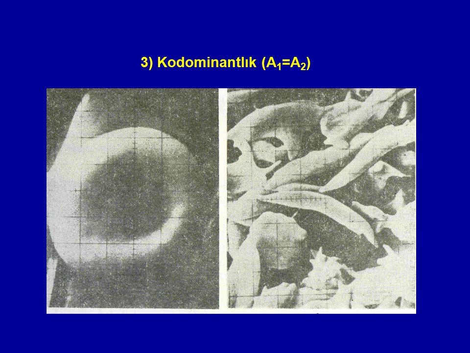 3) Kodominantlık (A 1 =A 2 )