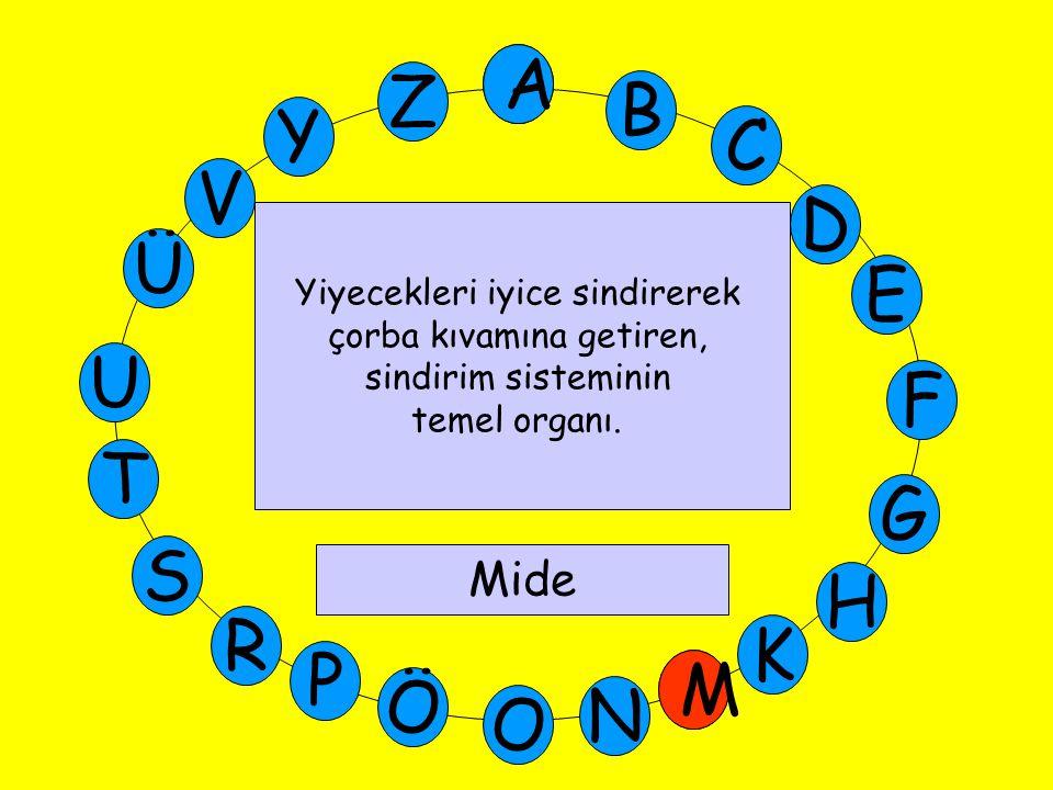 A M Ü V Y Z E D C B A U T G F S P Ö O H K N R M Yiyecekleri iyice sindirerek çorba kıvamına getiren, sindirim sisteminin temel organı. Mide