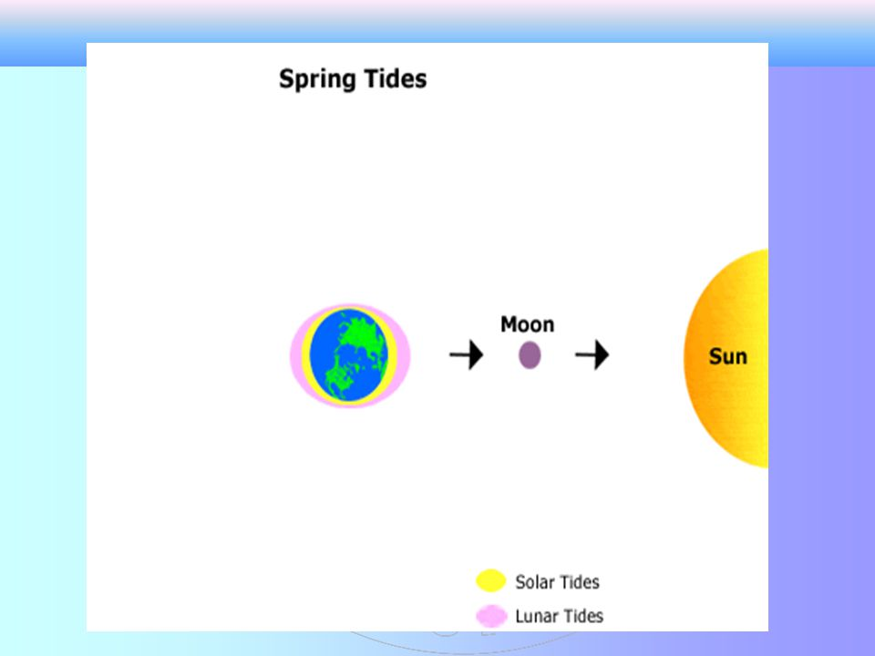 Spring Tides When the moon is full or new, the gravitational pull of the moon and sun are combined.