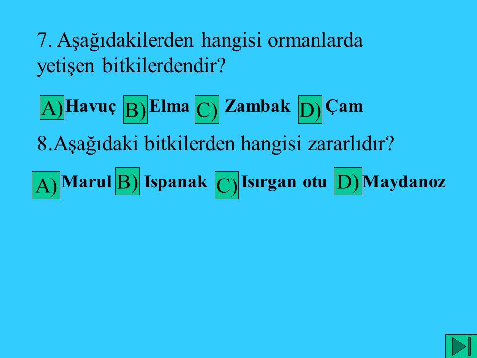 7. Aşağıdakilerden hangisi ormanlarda yetişen bitkilerdendir? A) Havuç B) Elma C) Zambak D) Çam 8.Aşağıdaki bitkilerden hangisi zararlıdır? A) Marul B