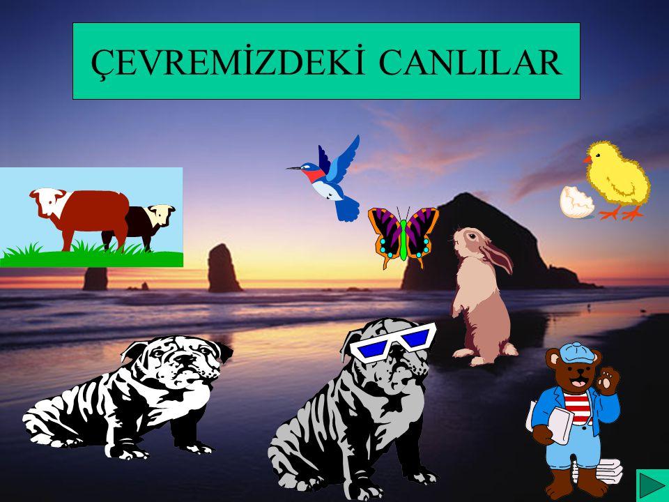 ÜNİTEMİZİN KONULARI A.HAYVANLAR 1.HAYVANLAR CANLIDIR 2.