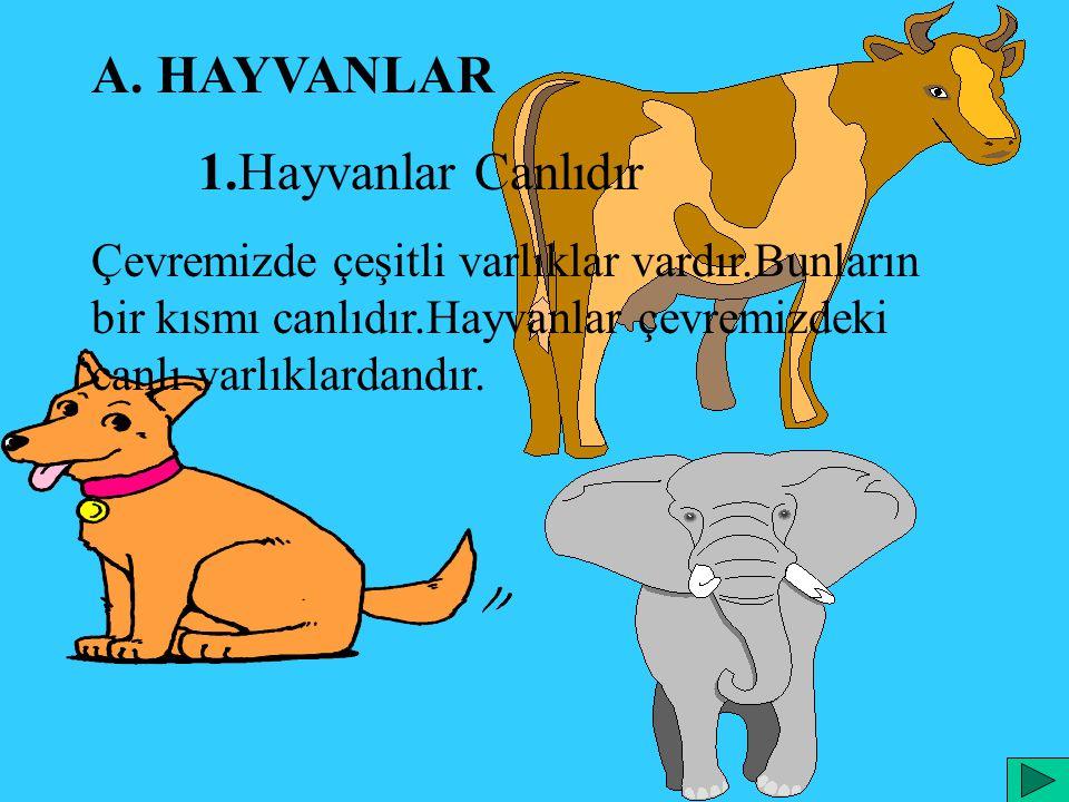 A. HAYVANLAR 1.Hayvanlar Canlıdır Çevremizde çeşitli varlıklar vardır.Bunların bir kısmı canlıdır.Hayvanlar çevremizdeki canlı varlıklardandır.