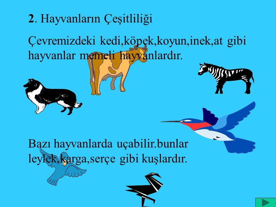 2. Hayvanların Çeşitliliği Çevremizdeki kedi,köpek,koyun,inek,at gibi hayvanlar memeli hayvanlardır. Bazı hayvanlarda uçabilir.bunlar leylek,karga,ser