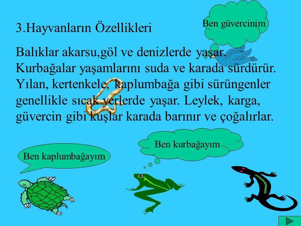 Ben güvercinim 3.Hayvanların Özellikleri Balıklar akarsu,göl ve denizlerde yaşar. Kurbağalar yaşamlarını suda ve karada sürdürür. Yılan, kertenkele, k