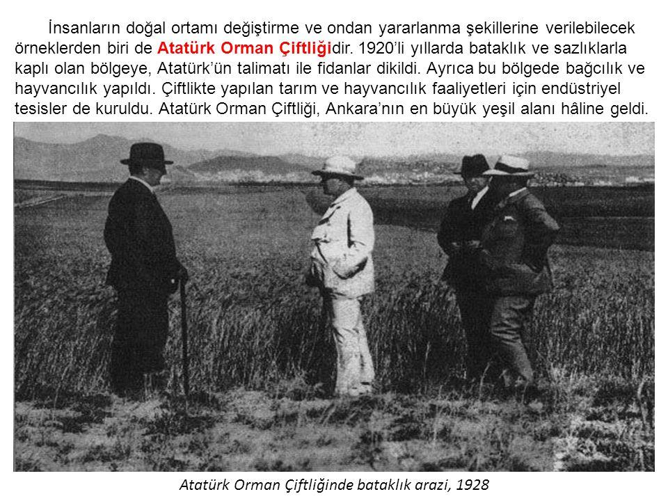 Atatürk Orman Çiftliği Yeşillendirilmiş Hali
