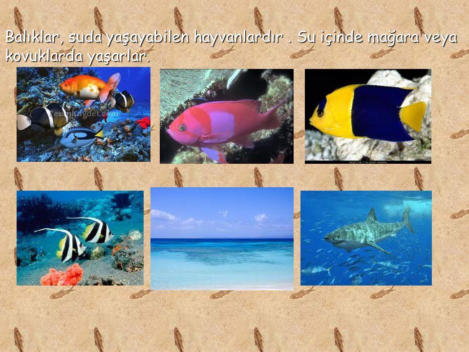 Balıklar, suda yaşayabilen hayvanlardır. Su içinde mağara veya kovuklarda yaşarlar.