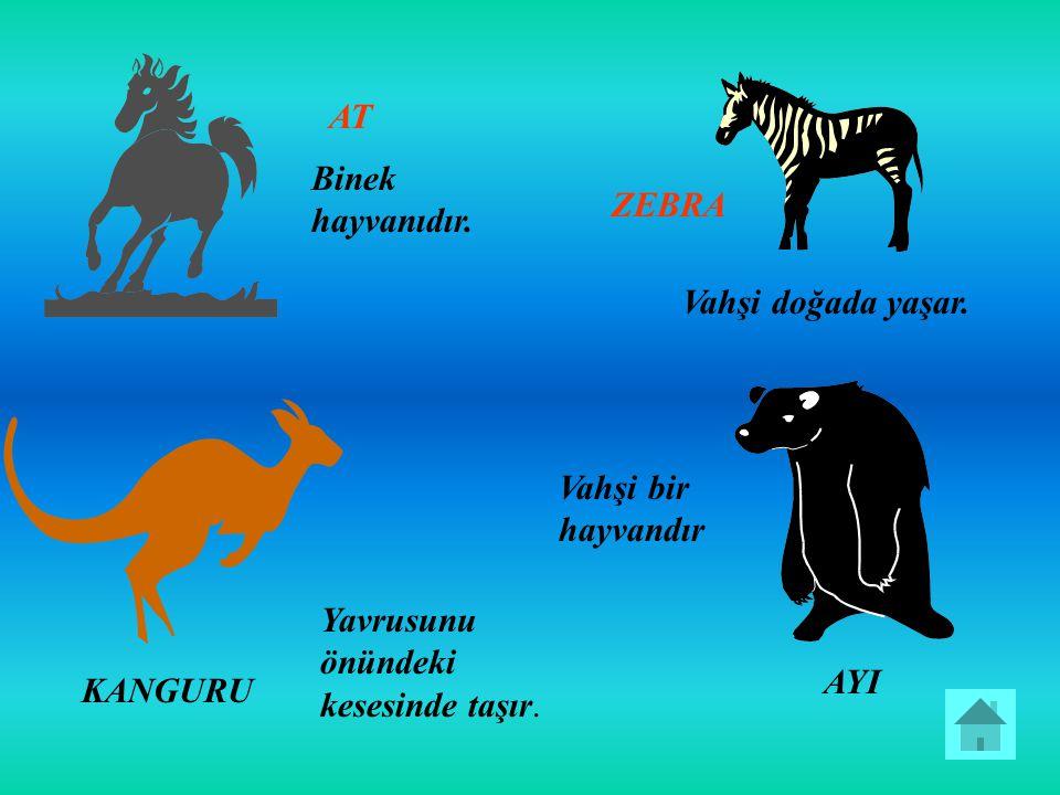 AT Binek hayvanıdır. ZEBRA Vahşi doğada yaşar. KANGURU Yavrusunu önündeki kesesinde taşır. AYI Vahşi bir hayvandır