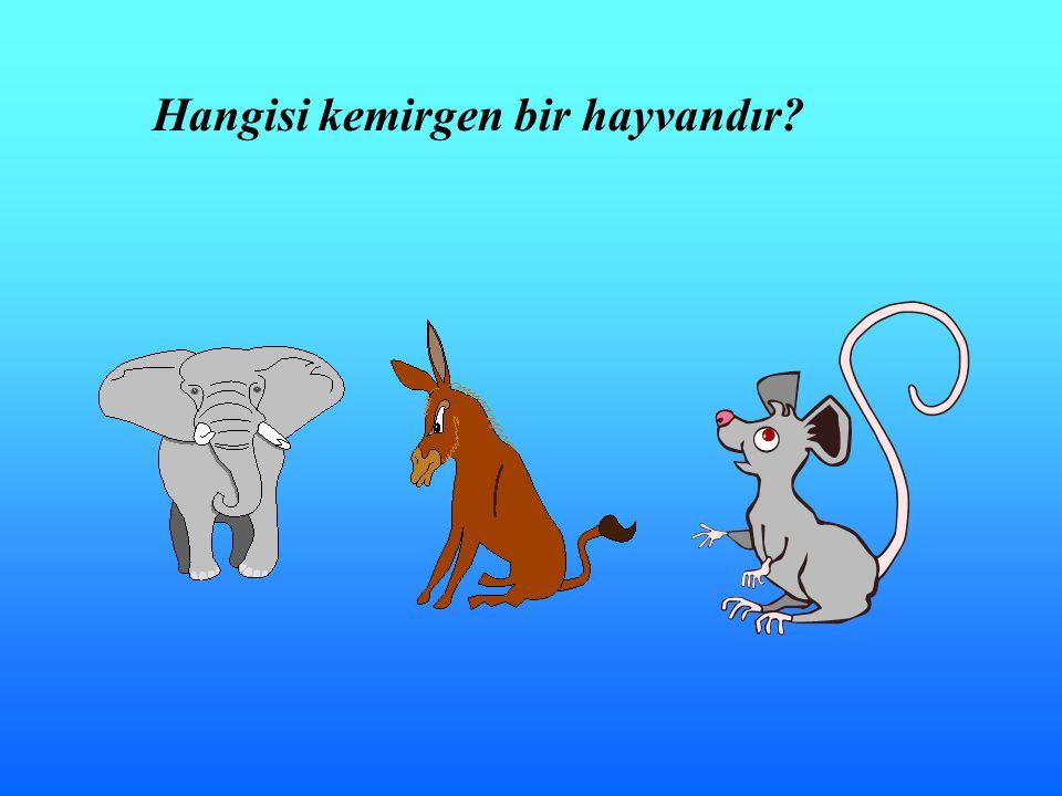 Hangisi kemirgen bir hayvandır?