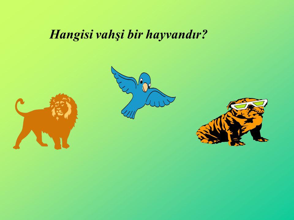 Hangisi vahşi bir hayvandır?