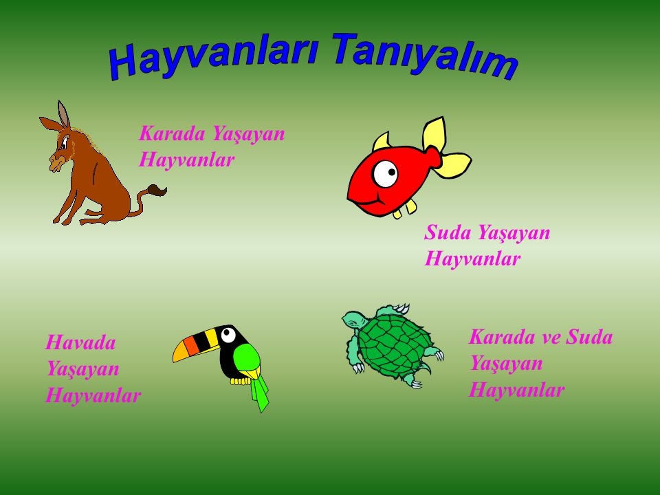 Karada Yaşayan Hayvanlar Suda Yaşayan Hayvanlar Havada Yaşayan Hayvanlar Karada ve Suda Yaşayan Hayvanlar