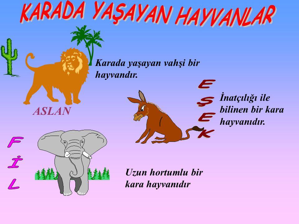 ASLAN Karada yaşayan vahşi bir hayvandır. Uzun hortumlu bir kara hayvanıdır İnatçılığı ile bilinen bir kara hayvanıdır.