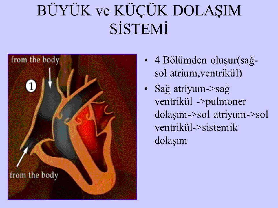 BÜYÜK ve KÜÇÜK DOLAŞIM SİSTEMİ 4 Bölümden oluşur(sağ- sol atrium,ventrikül) Sağ atriyum->sağ ventrikül ->pulmoner dolaşım->sol atriyum->sol ventrikül->sistemik dolaşım