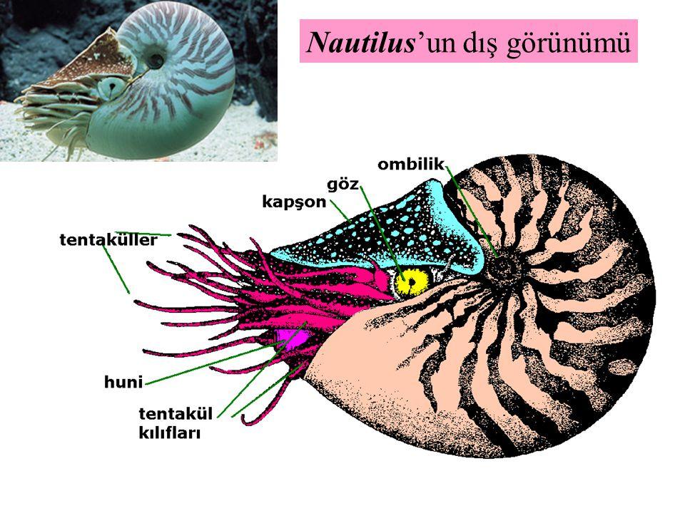 Nautilus'un dış görünümü