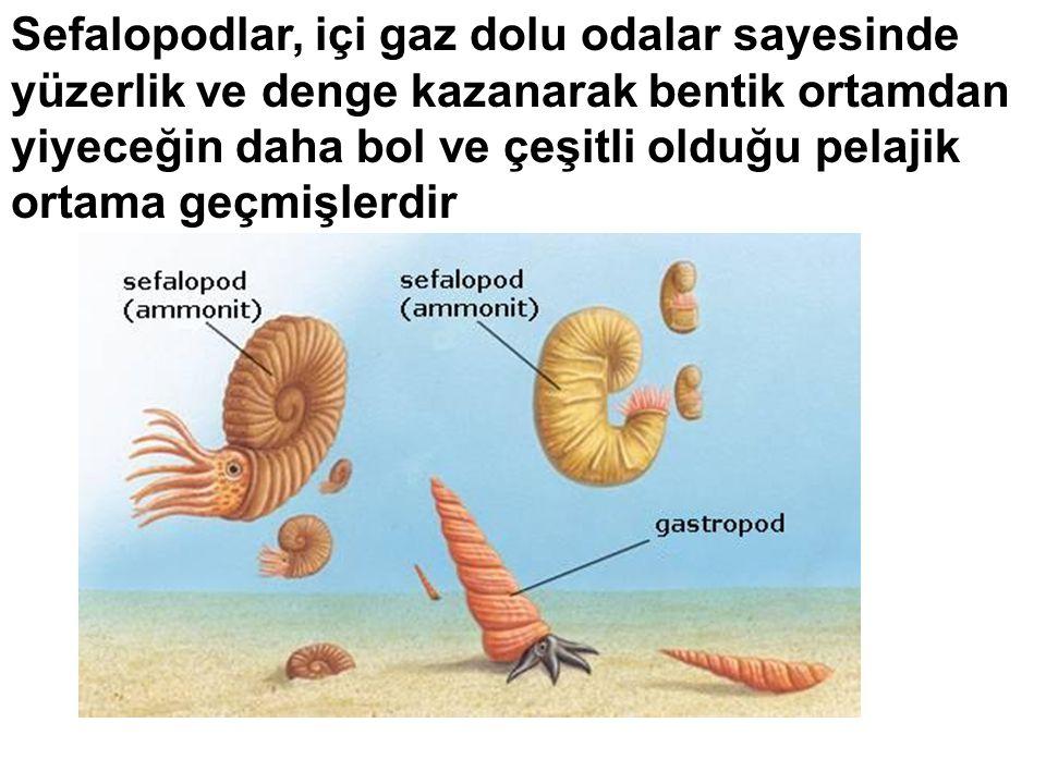 Sefalopodlar, içi gaz dolu odalar sayesinde yüzerlik ve denge kazanarak bentik ortamdan yiyeceğin daha bol ve çeşitli olduğu pelajik ortama geçmişlerd