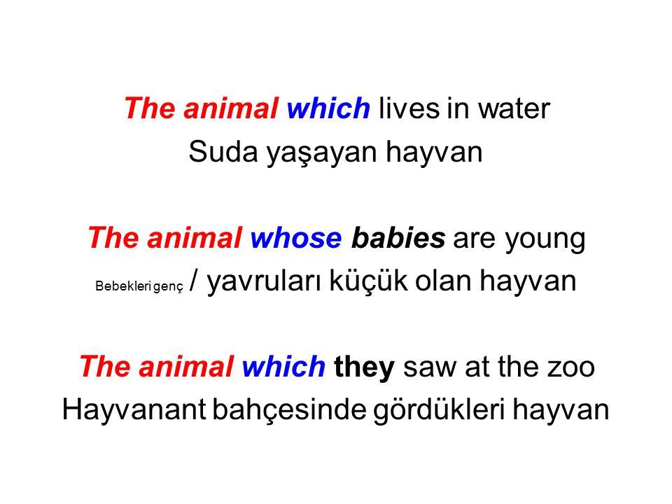The animal which lives in water Suda yaşayan hayvan The animal whose babies are young Bebekleri genç / yavruları küçük olan hayvan The animal which th
