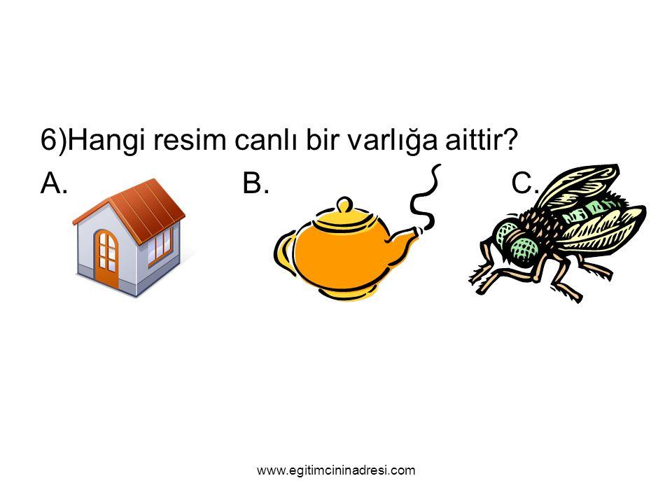 6)Hangi resim canlı bir varlığa aittir? A.B.C. www.egitimcininadresi.com