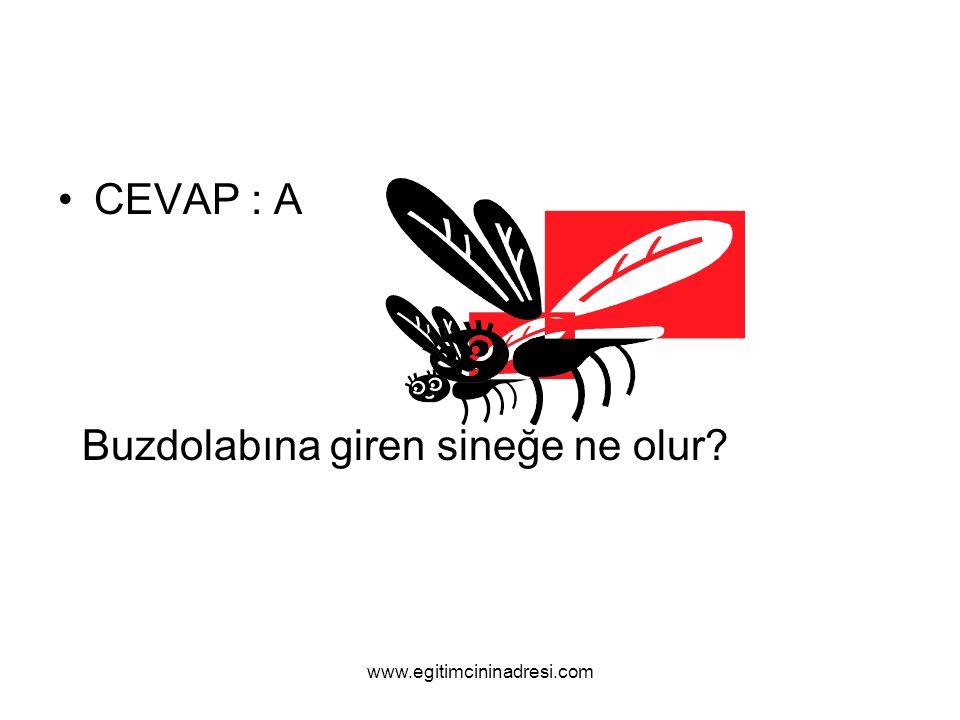 CEVAP : A Buzdolabına giren sineğe ne olur? www.egitimcininadresi.com