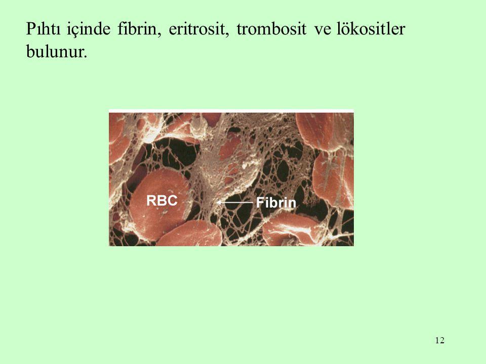 12 Pıhtı içinde fibrin, eritrosit, trombosit ve lökositler bulunur.