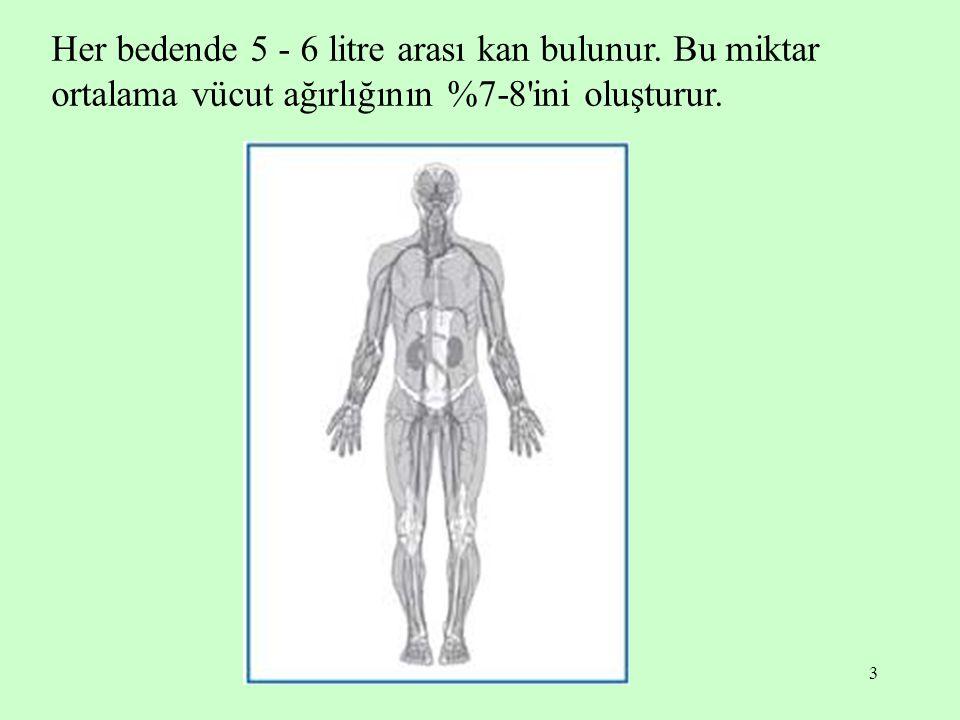 3 Her bedende 5 - 6 litre arası kan bulunur. Bu miktar ortalama vücut ağırlığının %7-8'ini oluşturur.