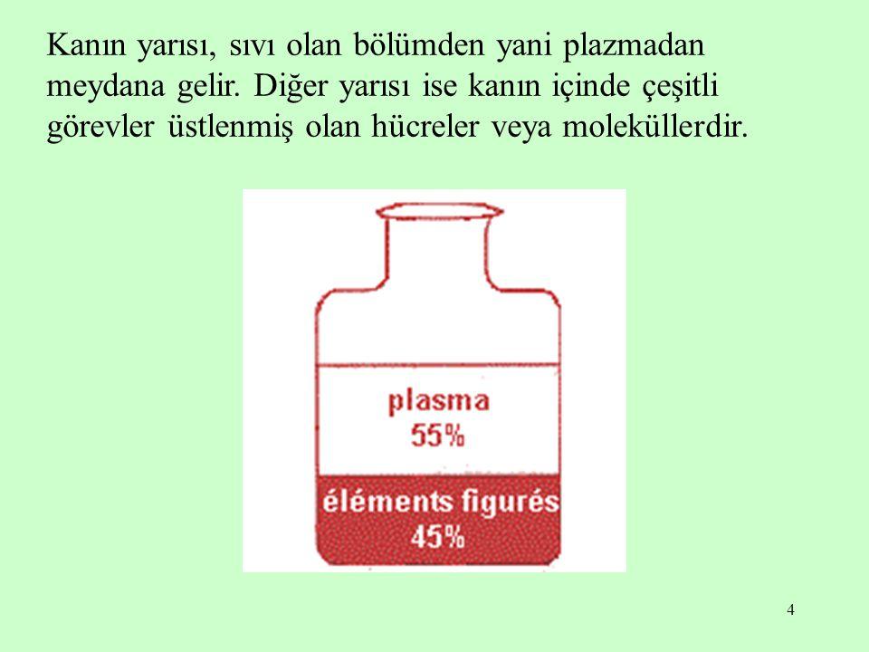 4 Kanın yarısı, sıvı olan bölümden yani plazmadan meydana gelir. Diğer yarısı ise kanın içinde çeşitli görevler üstlenmiş olan hücreler veya molekülle