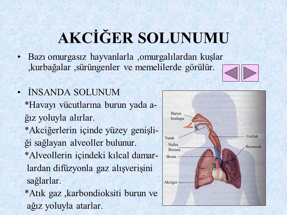 TRAKE SOLUNUMU Böceklerde görülür. ÇEKİRGEDE SOLUNUM *Oksijen ve karbondoksit alışverişi vücudun kasılıp gevşemesiyle sağlanır. *Oksijen ve karbondiok