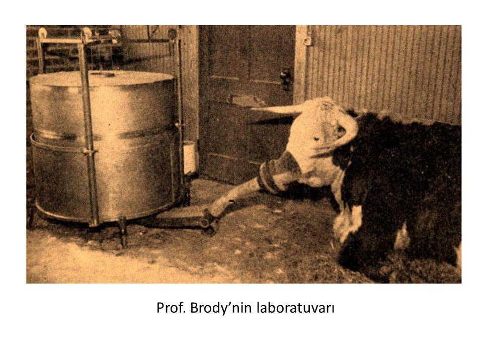 Prof. Brody'nin laboratuvarı