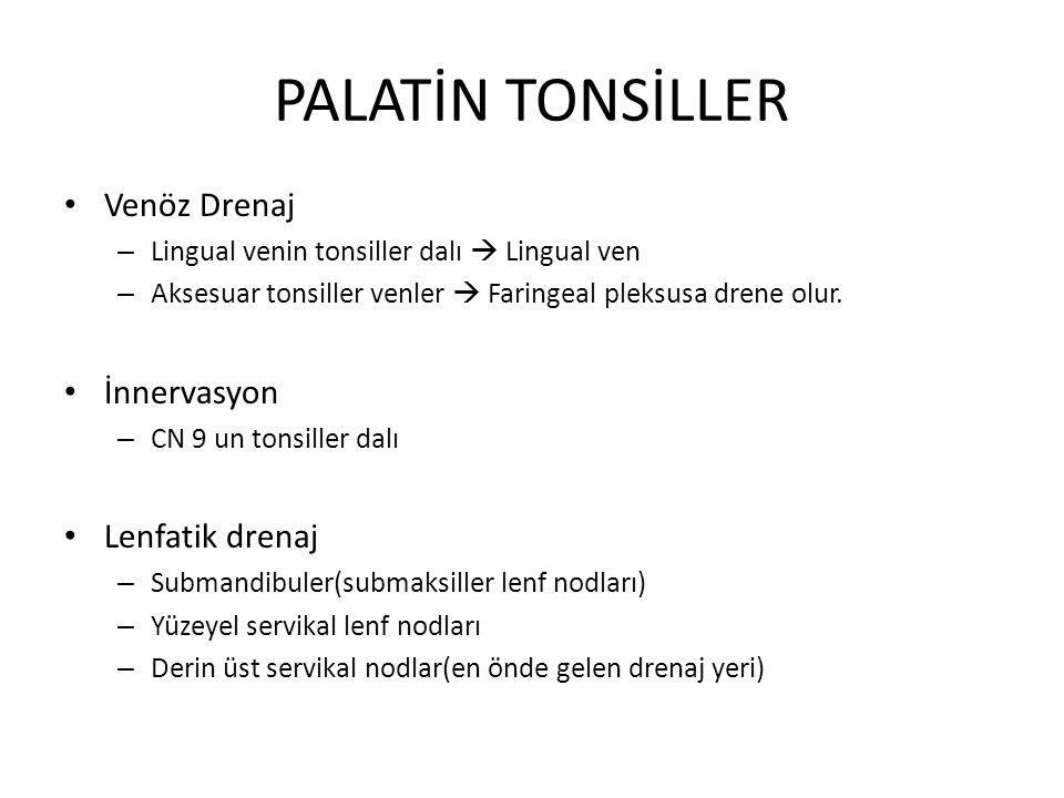 PALATİN TONSİLLER Venöz Drenaj – Lingual venin tonsiller dalı  Lingual ven – Aksesuar tonsiller venler  Faringeal pleksusa drene olur.