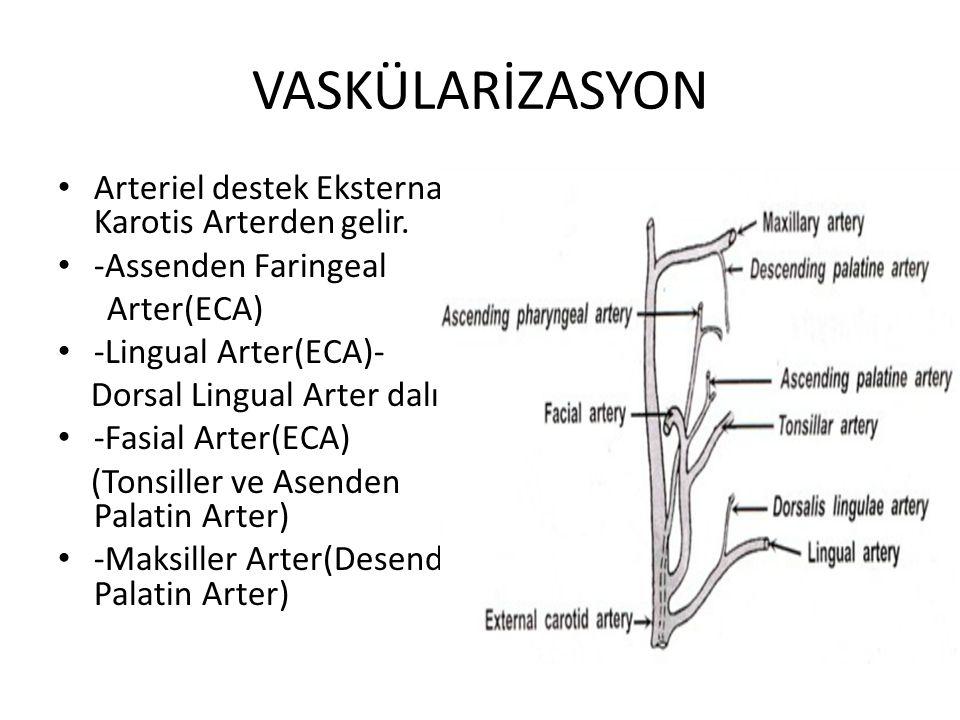 VASKÜLARİZASYON Arteriel destek Eksternal Karotis Arterden gelir.