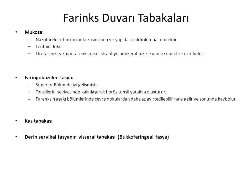 Farinks Duvarı Tabakaları Mukoza: – Nazofarekste burun mukozasına benzer yapıda silialı kolumnar epiteldir.