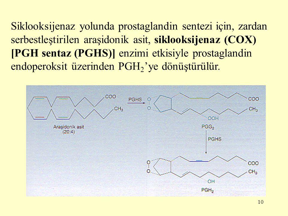 10 Siklooksijenaz yolunda prostaglandin sentezi için, zardan serbestleştirilen araşidonik asit, siklooksijenaz (COX) [PGH sentaz (PGHS)] enzimi etkisi