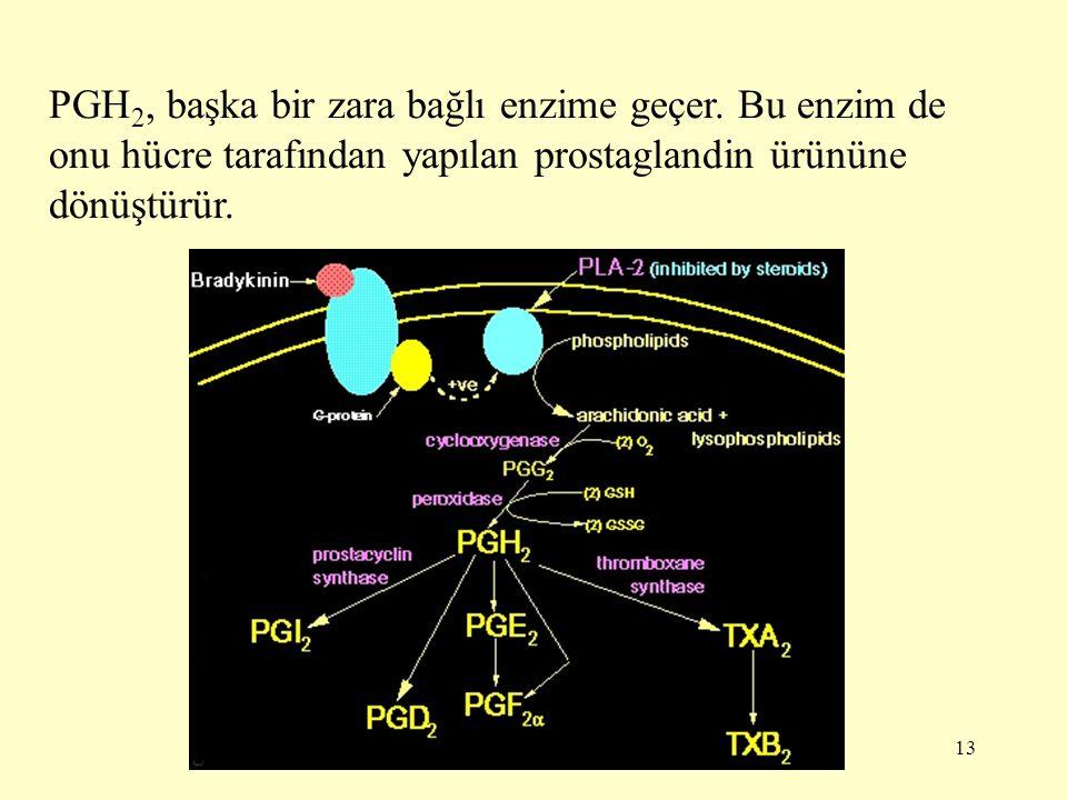 13 PGH 2, başka bir zara bağlı enzime geçer. Bu enzim de onu hücre tarafından yapılan prostaglandin ürününe dönüştürür.