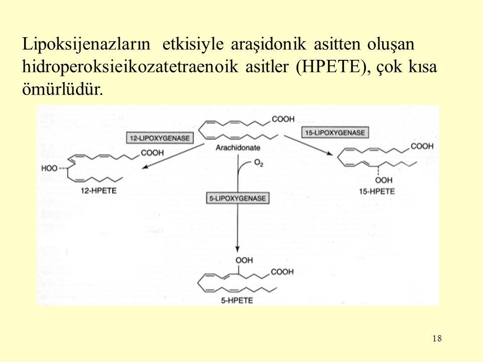 18 Lipoksijenazların etkisiyle araşidonik asitten oluşan hidroperoksieikozatetraenoik asitler (HPETE), çok kısa ömürlüdür.
