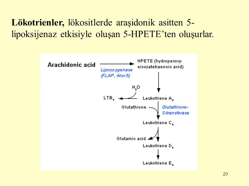 20 Lökotrienler, lökositlerde araşidonik asitten 5- lipoksijenaz etkisiyle oluşan 5-HPETE'ten oluşurlar.