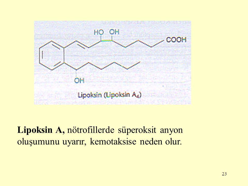 23 Lipoksin A, nötrofillerde süperoksit anyon oluşumunu uyarır, kemotaksise neden olur.