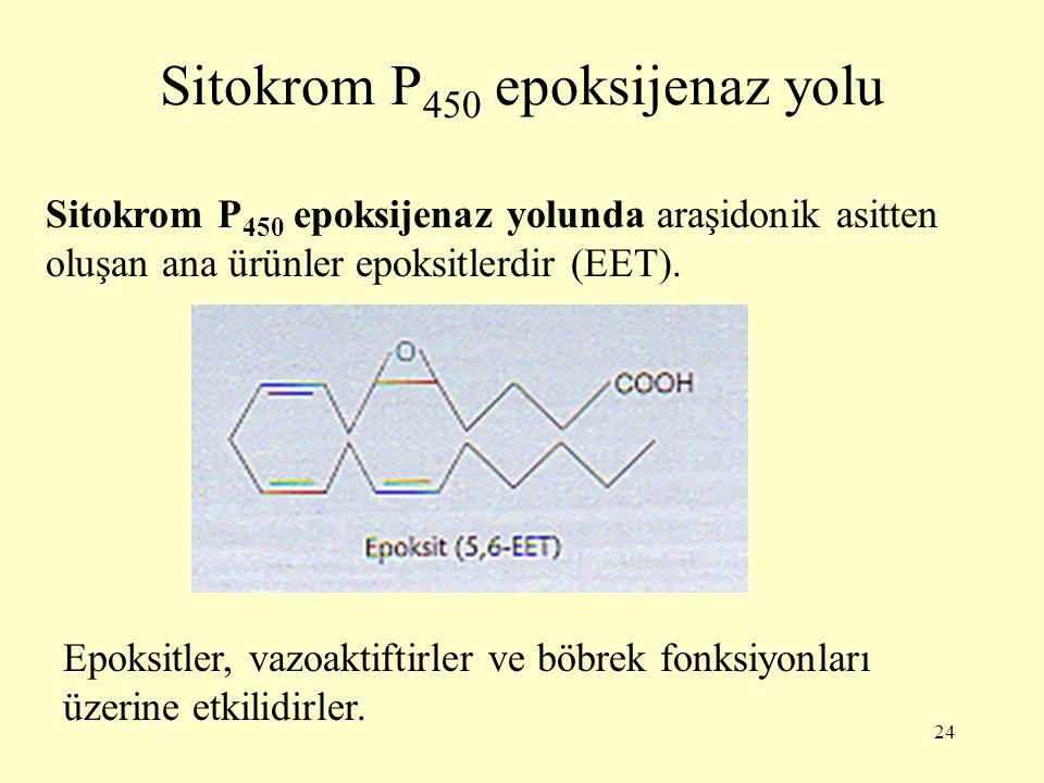 24 Sitokrom P 450 epoksijenaz yolu Sitokrom P 450 epoksijenaz yolunda araşidonik asitten oluşan ana ürünler epoksitlerdir (EET). Epoksitler, vazoaktif
