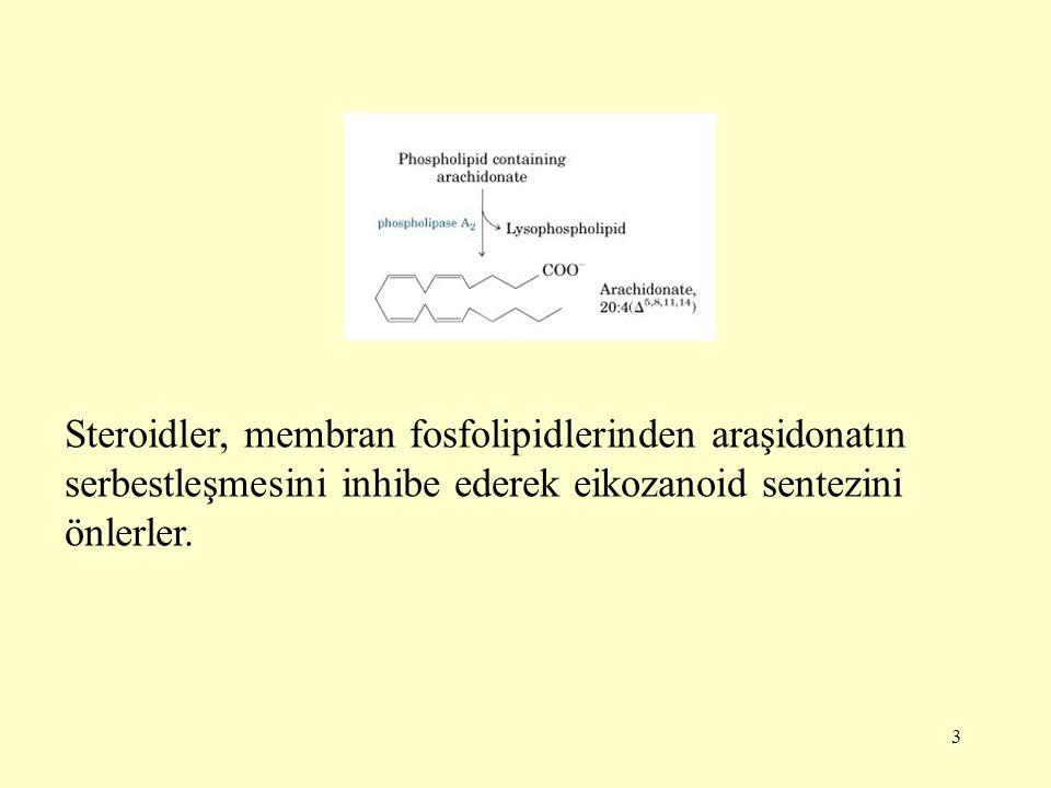 3 Steroidler, membran fosfolipidlerinden araşidonatın serbestleşmesini inhibe ederek eikozanoid sentezini önlerler.