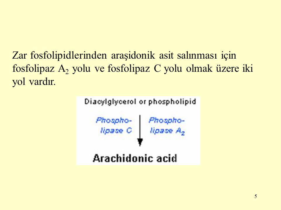 5 Zar fosfolipidlerinden araşidonik asit salınması için fosfolipaz A 2 yolu ve fosfolipaz C yolu olmak üzere iki yol vardır.