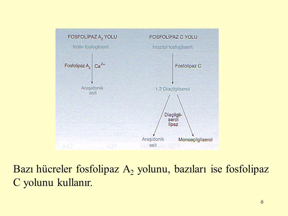 7 Araşidonattan eikozanoid sentezi için üç yol vardır: -Siklooksijenaz yolunda prostaglandinler ve tromboksanlar oluşur.