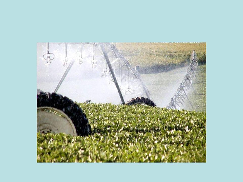 Yapılan 2010 yılı projeksiyonuna göre soya tüketimimizin 3.5 milyon tona ulaşacağı tespit edilmiştir.