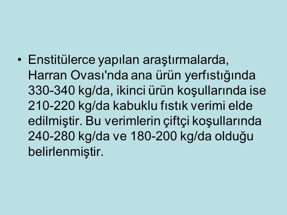 Enstitülerce yapılan araştırmalarda, Harran Ovası'nda ana ürün yerfıstığında 330-340 kg/da, ikinci ürün koşullarında ise 210-220 kg/da kabuklu fıstık