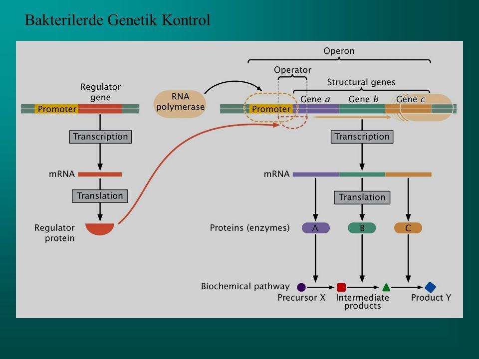 Bakterilerde Genetik Kontrol