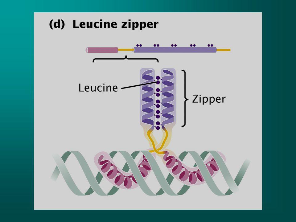 E.coli'de trp operonu 5 tane yapısal gen içerir ve bu genlerin ürünleri karizmatı triptofana çevirir trpE geni5' UTR bölgesi içerir ve attenuation denen regülatör mekanizmada önemli bir rol oynar.
