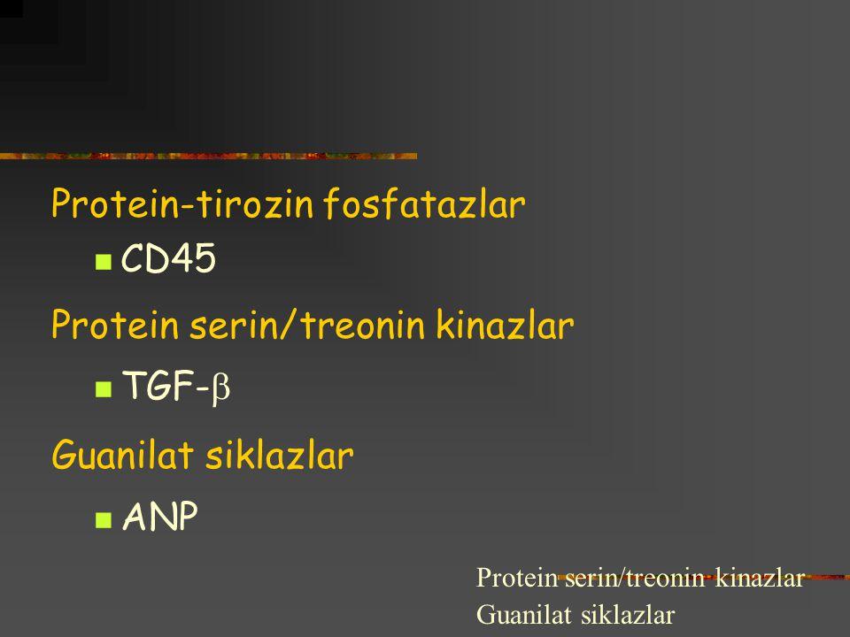 Protein-tirozin fosfatazlar CD45 Protein serin/treonin kinazlar TGF-  Guanilat siklazlar ANP Protein serin/treonin kinazlar Guanilat siklazlar