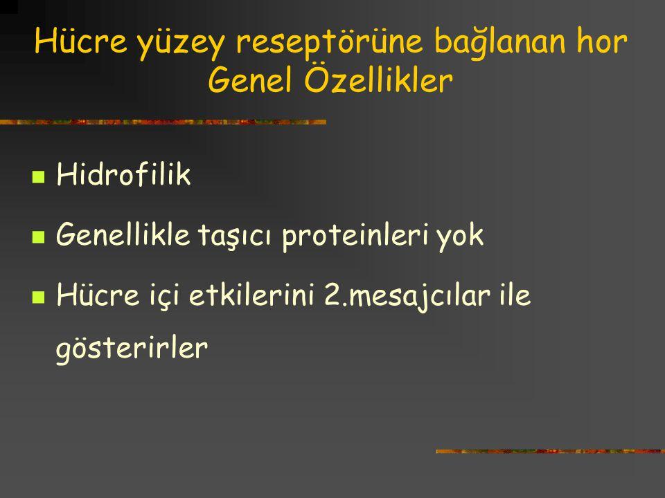 Hücre yüzey reseptörüne bağlanan hor 2.