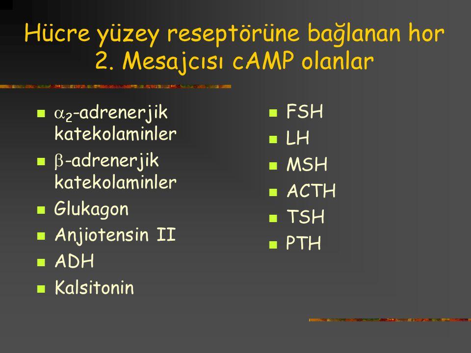 Hücre yüzey reseptörüne bağlanan hor 2. Mesajcısı cAMP olanlar  2 -adrenerjik katekolaminler  -adrenerjik katekolaminler Glukagon Anjiotensin II ADH