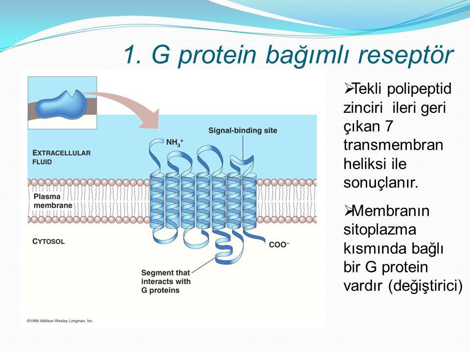 1. G protein bağımlı reseptör  Tekli polipeptid zinciri ileri geri çıkan 7 transmembran heliksi ile sonuçlanır.  Membranın sitoplazma kısmında bağlı