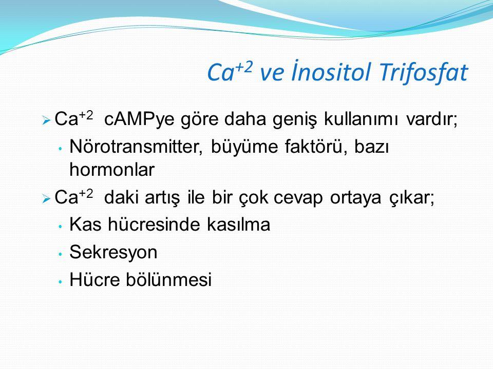 Ca +2 ve İnositol Trifosfat  Ca +2 cAMPye göre daha geniş kullanımı vardır; Nörotransmitter, büyüme faktörü, bazı hormonlar  Ca +2 daki artış ile bi