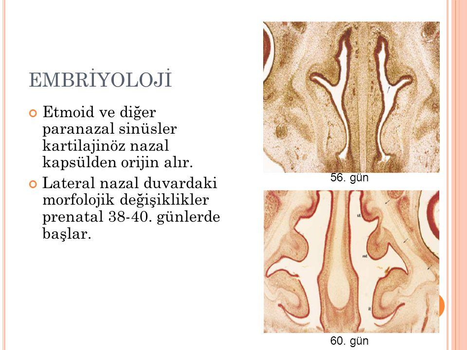 EMBRİYOLOJİ Etmoid ve diğer paranazal sinüsler kartilajinöz nazal kapsülden orijin alır. Lateral nazal duvardaki morfolojik değişiklikler prenatal 38-