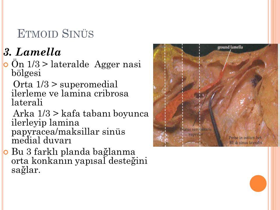 E TMOID S INÜS 3. Lamella Ön 1/3 > lateralde Agger nasi bölgesi Orta 1/3 > superomedial ilerleme ve lamina cribrosa laterali Arka 1/3 > kafa tabanı bo