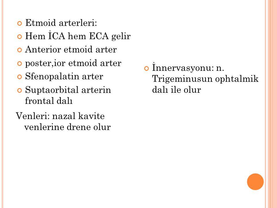 Etmoid arterleri: Hem İCA hem ECA gelir Anterior etmoid arter poster,ior etmoid arter Sfenopalatin arter Suptaorbital arterin frontal dalı İnnervasyon